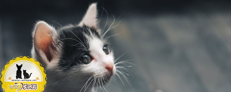 猫奶藓是什么 猫奶藓治疗很简单