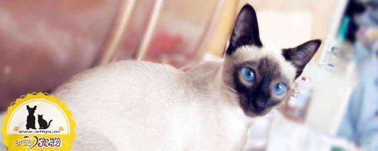 猫免疫缺陷病传播途径 猫免疫缺陷病毒需要多加注意!
