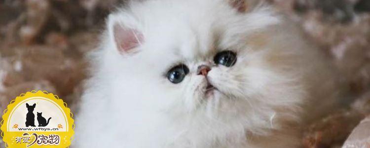 猫免疫缺陷病毒 搞清楚猫免疫缺陷病毒是什么了吗?