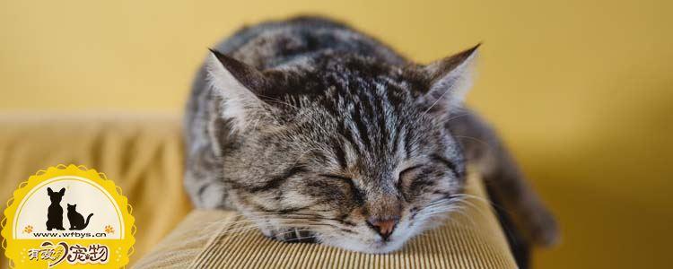 猫总流眼泪是怎么回事 猫流眼泪是因为什么