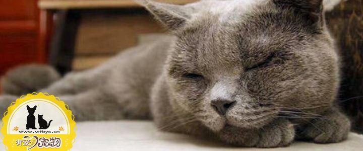 夏天猫容易得的三种皮肤病 铲屎官们注意了!