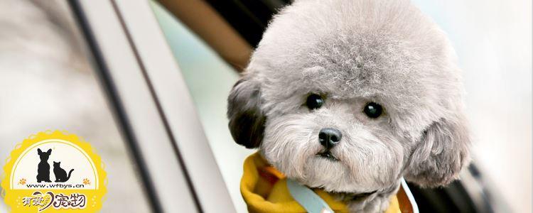狗狗绝育后需要注意什么 小心狗狗伤口感染哦