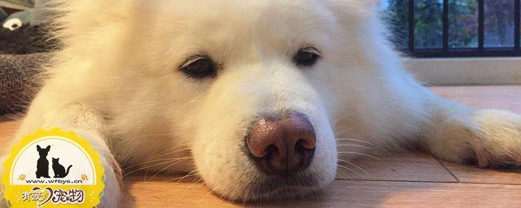 夏天如何预防狗狗食物中毒 夏天来临要注意食物变质