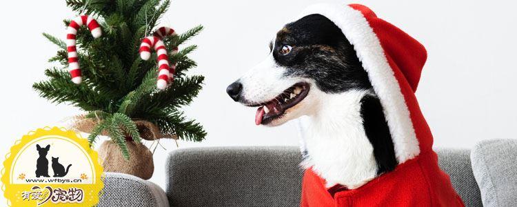 狗狗食物中毒原因有哪些 为什么会出现食物中毒