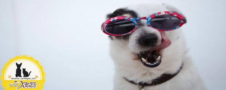 狗狗牙结石怎么去除 不治疗可导致牙齿脱落