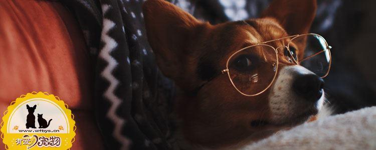 狗食物中毒的对应处理办法 不同中毒原因对应不同治疗方法