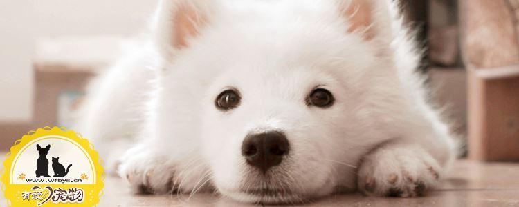 狗狗为什么晕车 教你如何应季处理和预防狗狗晕车