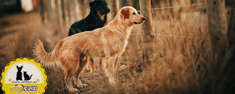 狗狗食物中毒怎么办 狗食物中毒了勇什么可以解毒