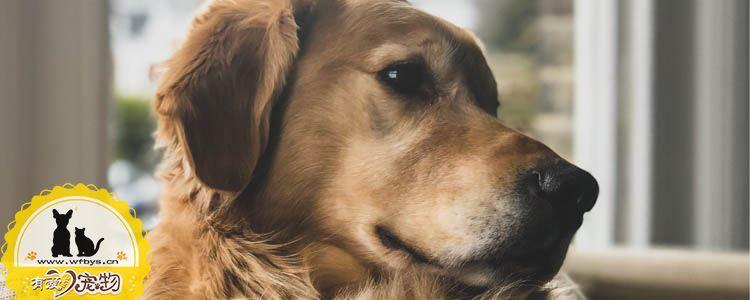 狗过敏怎么办 狗过敏特征是什么