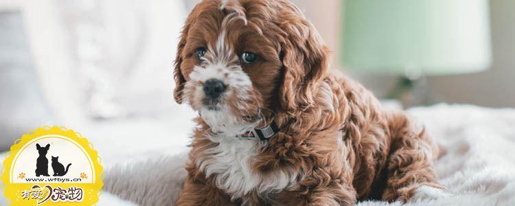 狗呕吐是怎么回事 狗呕吐吃什么药