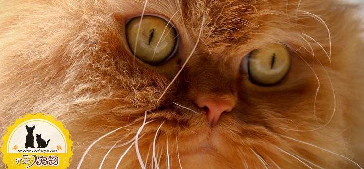 怎么给波斯猫洗澡 给波斯猫洗澡要注意什么