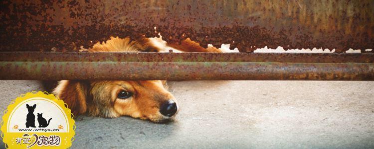 狗狗着凉怎么办 狗狗着凉的症状与治疗