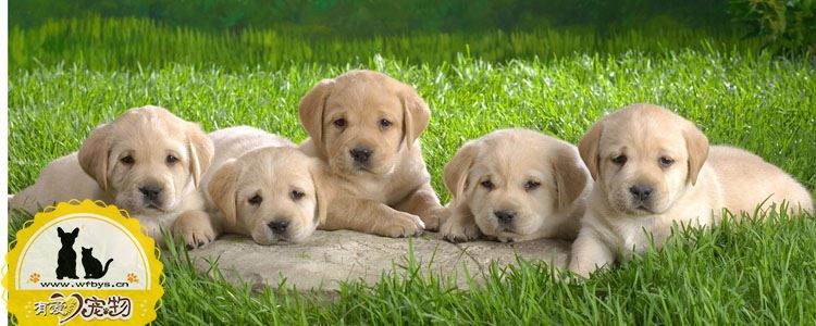 狗狗为什么会咳嗽 狗狗咳嗽怎么办