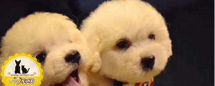 如何预防狗狗过敏 对狗狗过敏的预防方法