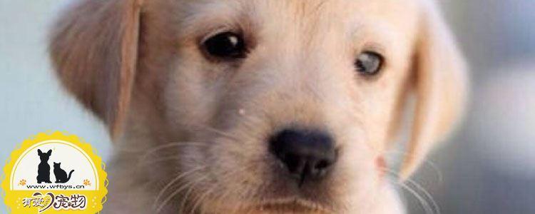 犬弓形虫会不会传染给人 传染的途径是什么