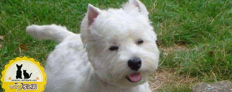 狗狗细小怎么治疗 狗狗细小的治疗是一个漫长的过程!