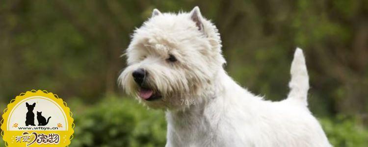 狗狗冠状病毒的症状 狗狗出现冠状病毒不可忽视!