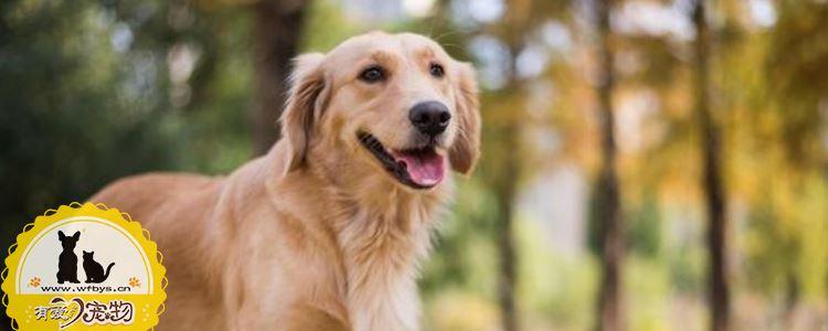 犬瘟热病毒来源 犬瘟热到底是什么你搞懂了吗?