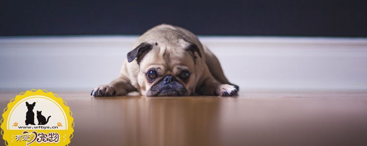 为什么要给狗狗驱虫 你知道原因吗