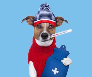 小狗发烧的症状有哪些