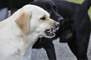 被狗咬怎么处理伤口