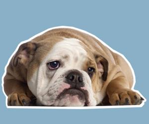 犬蠕形螨病怎么治疗