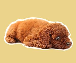 犬瘟热初期症状有哪些