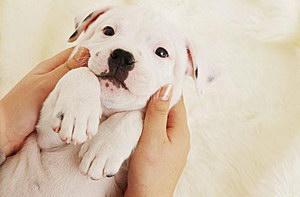 犬瘟热病毒治疗预防方法