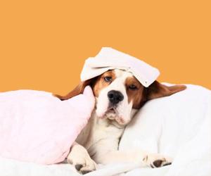 狗瘟的治疗方法