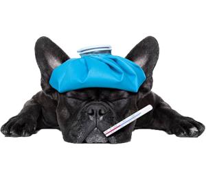 狗瘟症状有哪些