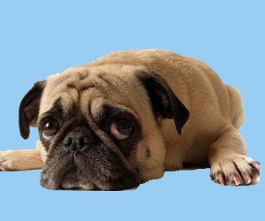 狗瘟早期症状有哪些