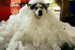 狗狗中暑怎么办