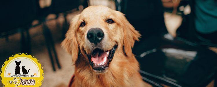 犬冠状病毒会传染人吗 犬冠状病毒能治好吗