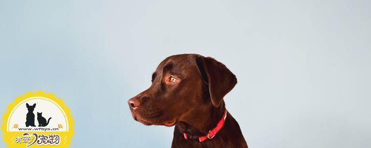 导致狗狗皮肤病的原因 狗怎么患上的皮肤病