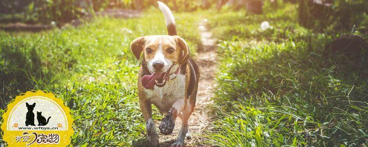狗脓皮症症状 狗脓皮病的治疗方法