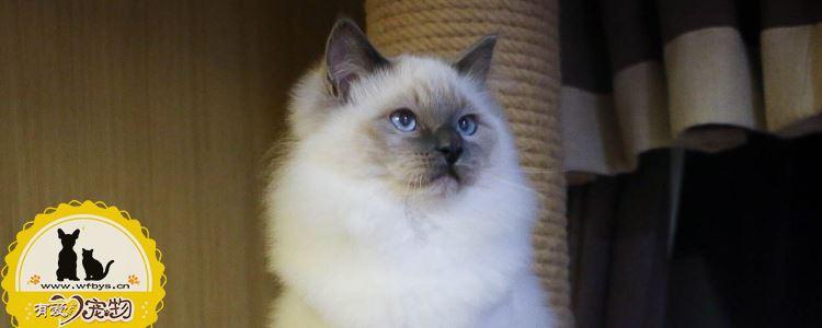 猫藓怎么治疗 猫藓治疗必须知道的重点知识!