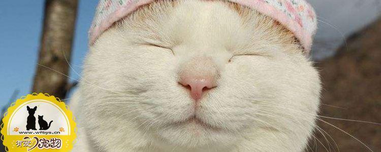 猫驱虫怎么做 猫感染寄生虫有什么症状