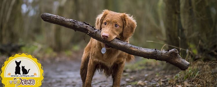狗狗怎么驱虫 这几点你一定要知道
