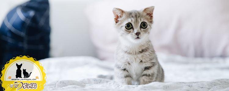 小奶猫断奶后喂养方法 科学护理需知