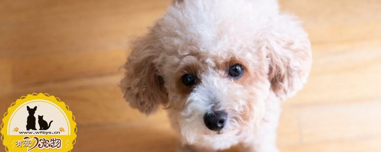 狗狗淋雨拉肚子怎么办 教你怎么应对狗狗拉肚子