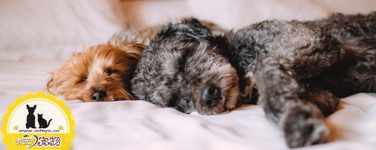小狗呼吸急促怎么回事 注意区分生理性和病理性
