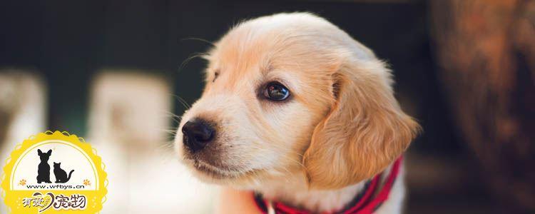狗体外寄生虫会带来何种疾病 别让寄生虫毁了狗狗的身体