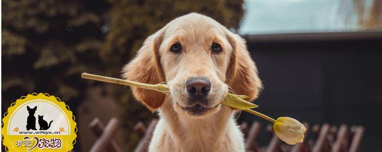 老年犬的护理最重要 狗狗老了你需要做些什么
