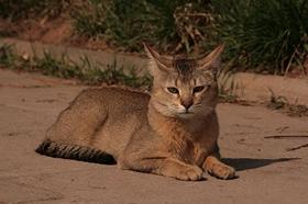 非洲狮子猫眼睛分泌物多怎么办