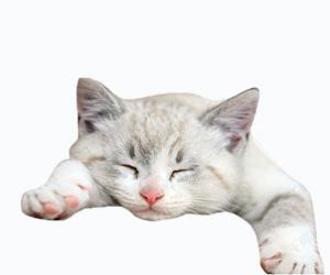 猫流口水怎么治疗