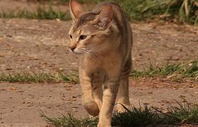 非洲狮子猫脱肛怎么办 脱肛又叫直肠脱