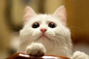 猫咪鼻炎如何治疗 猫咪鼻炎治疗方法