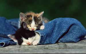 猫白血病怎么传染