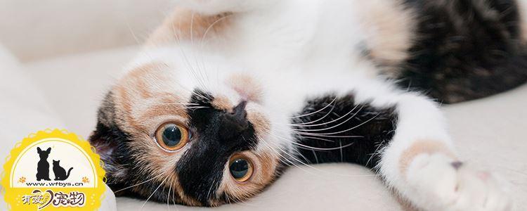 猫三联预防哪些疾病 你不知道的猫三联
