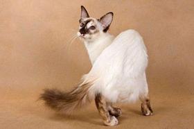 爪哇猫不肯吃药怎么办 爪哇猫不肯吃药解决办法